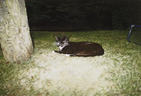 Katze | 2012 | Öl auf MDF | 18,6 x 27,7 cm